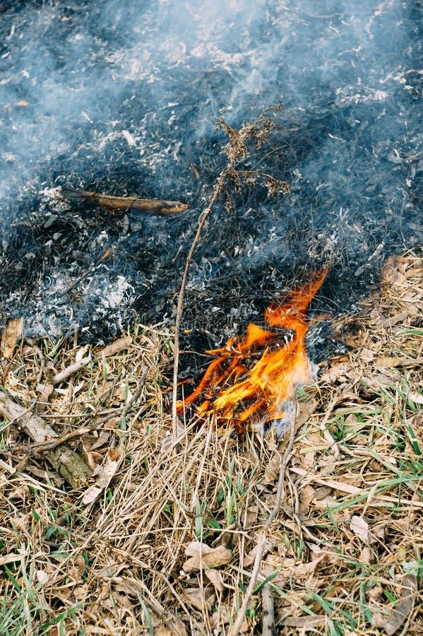 Hierba en fuego imagenes de archivo