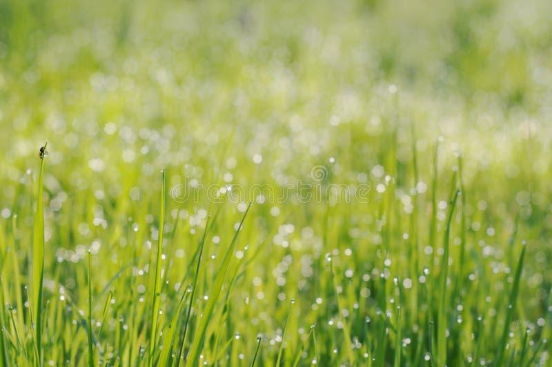 Hierba en gotitas del rocío en la luz del sol de la mañana imagen de archivo libre de regalías