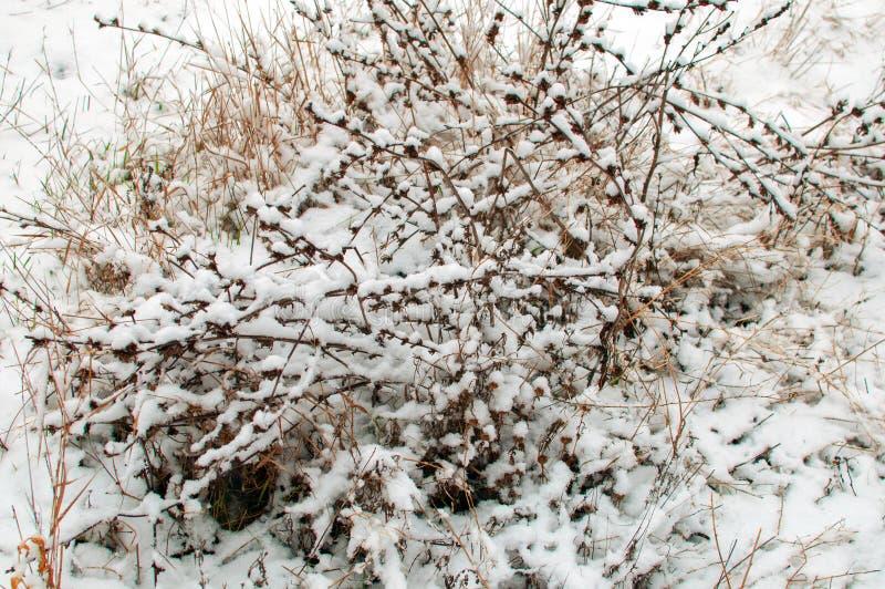 Hierba en la nieve imágenes de archivo libres de regalías