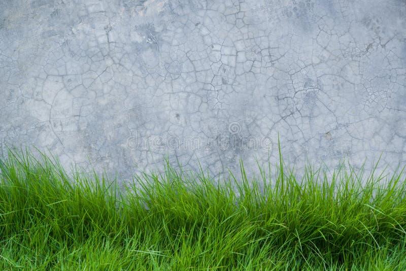 Hierba en la pared del cemento fotografía de archivo