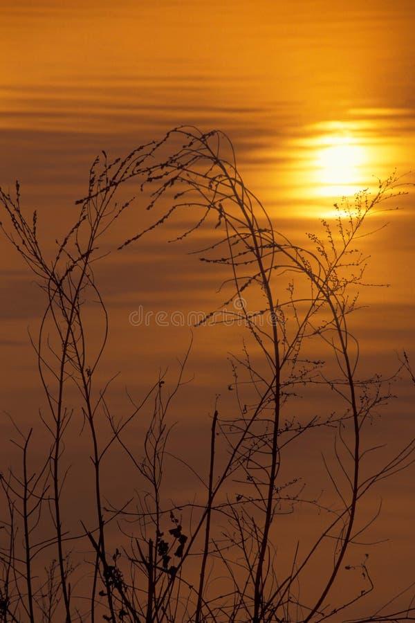 Hierba en la puesta del sol