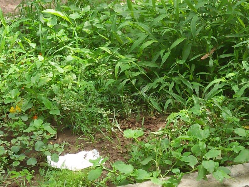 hierba en mi casa fotos de archivo