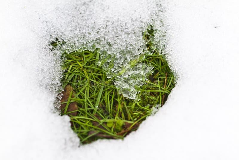 Hierba en nieve de fusión imagen de archivo