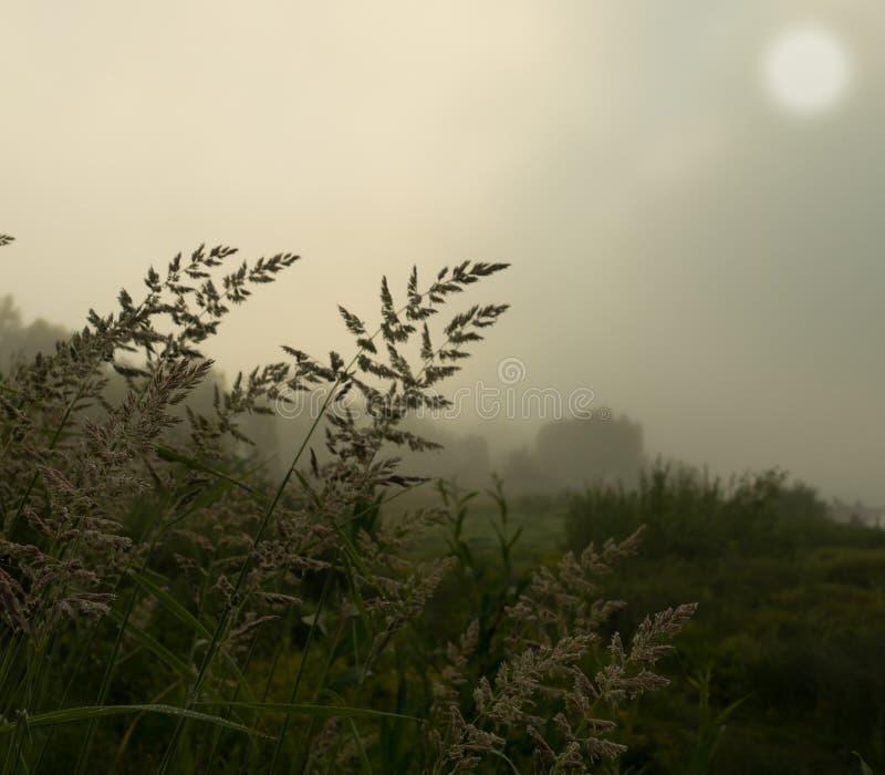 Hierba en una mañana de niebla foto de archivo libre de regalías