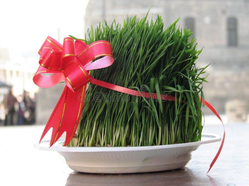 Hierba festiva del trigo en Baku Azerbaijan para Novruz foto de archivo libre de regalías