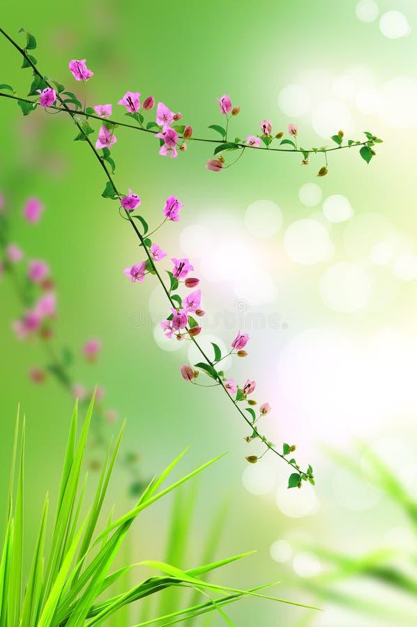Hierba floral y fresca rosada fotos de archivo libres de regalías