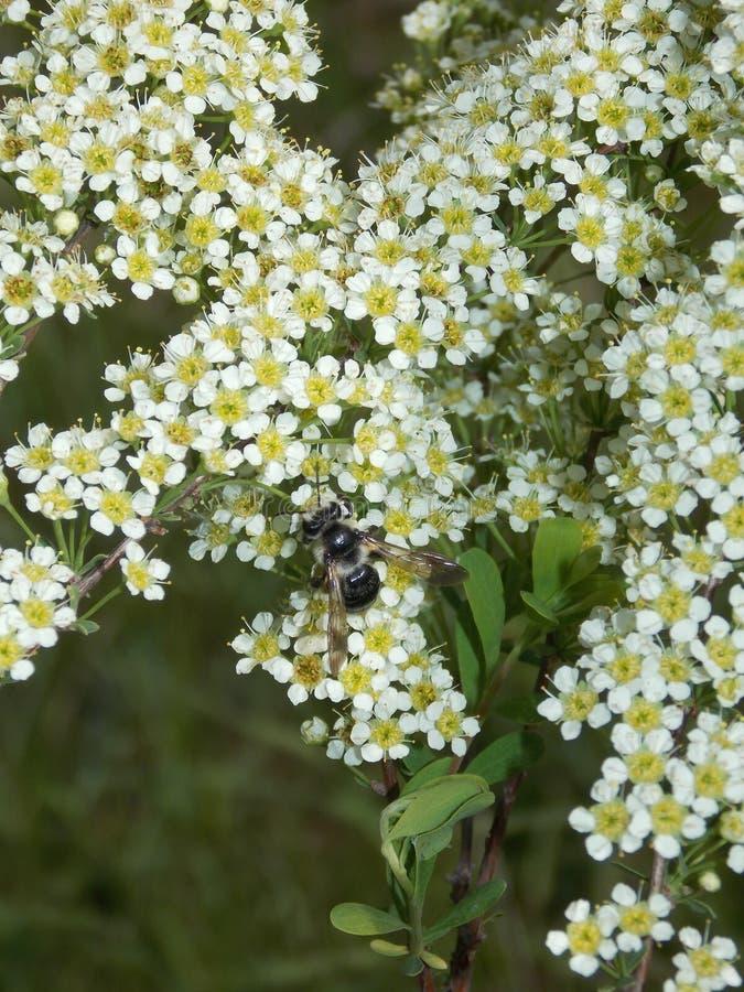 Hierba floreciente del campo imagen de archivo
