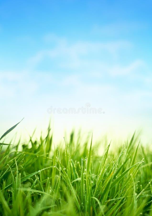 Hierba fresca de la primavera foto de archivo