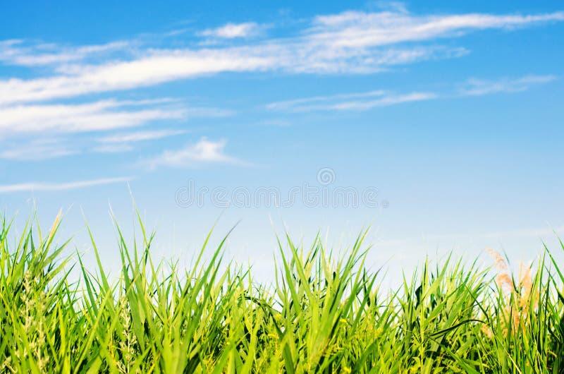 Hierba fresca encendido y cielo azul Paisaje Visión hermosa naturaleza, ambiente Fondo para el diseño Foco selectivo fotos de archivo