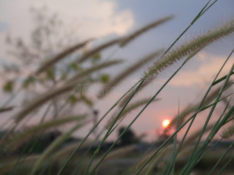 Hierba hermosa del verano fotos de archivo