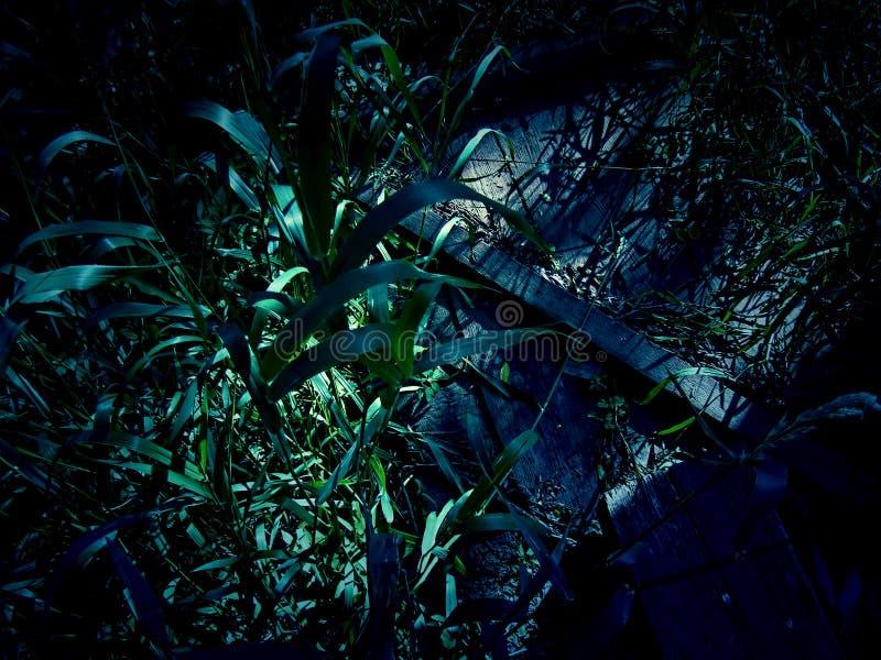 Hierba larga de la noche foto de archivo