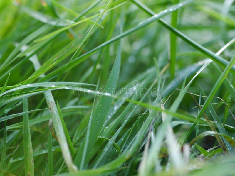 Hierba mojada verde imagen de archivo