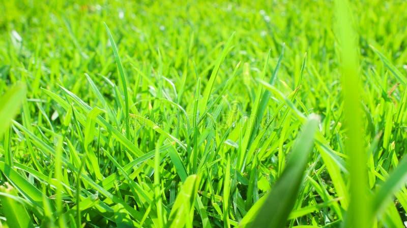 hierba natural para la textura del jardín imagenes de archivo