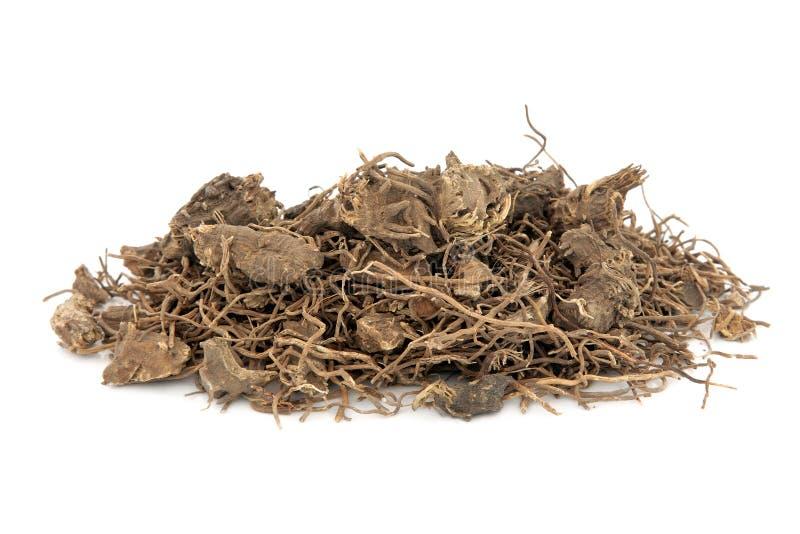 Hierba negra de la raíz de Cohosh fotografía de archivo