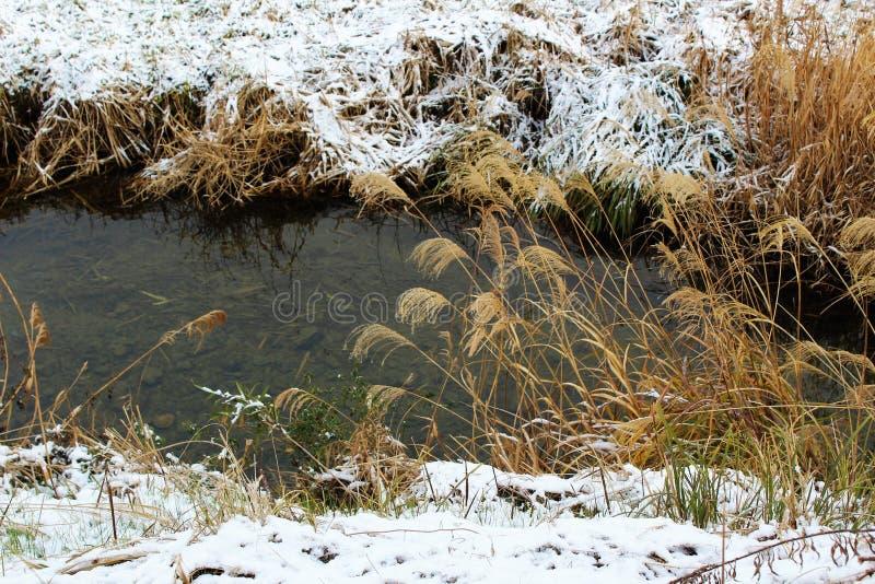 Hierba nevada en un riverbank en Japón imagen de archivo