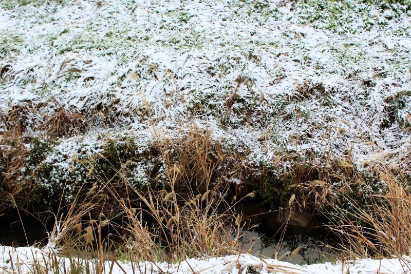 Hierba nevada en un riverbank en Japón foto de archivo