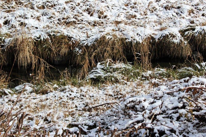 Hierba nevada en un riverbank en Japón fotos de archivo