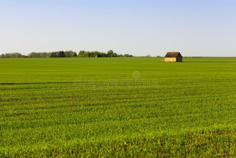 hierba o cereales, fotografía de archivo libre de regalías
