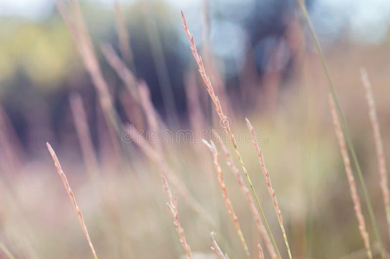 Hierba otoñal en un fondo multicolor fotos de archivo