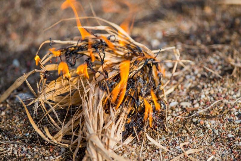 Hierba seca ardiendo de la primavera imagen de archivo libre de regalías