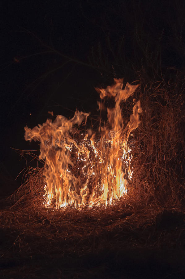 Hierba seca ardiente en la noche fotografía de archivo libre de regalías
