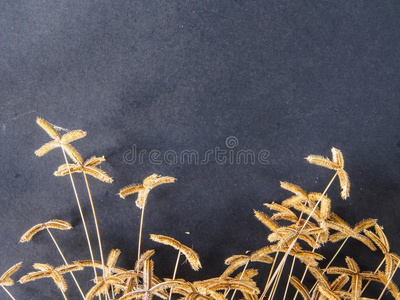 Hierba seca de la flor en blackground negro fotografía de archivo libre de regalías