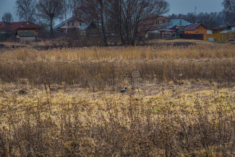 Hierba seca de la primavera fotos de archivo