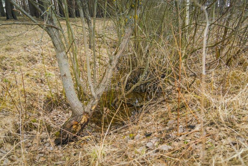 Hierba seca de la primavera fotos de archivo libres de regalías