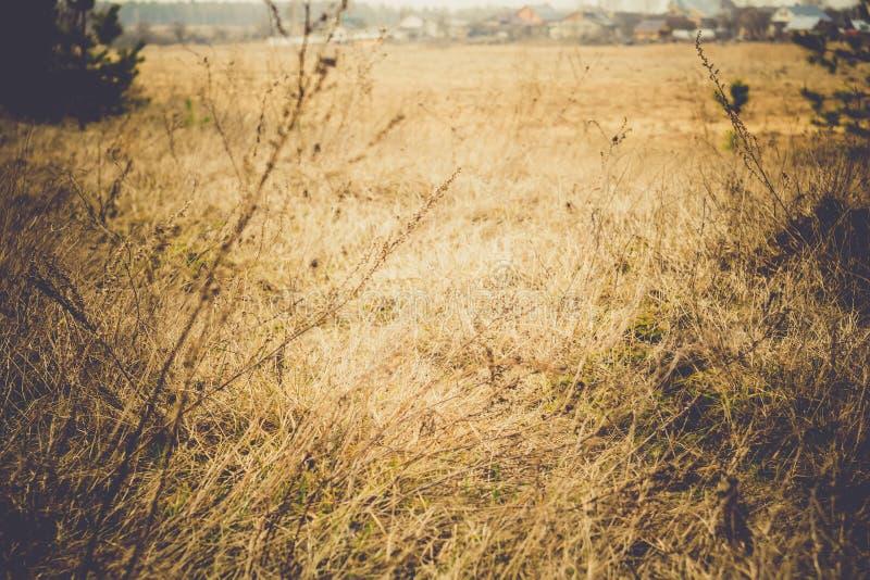 Hierba seca de la primavera retra imagenes de archivo
