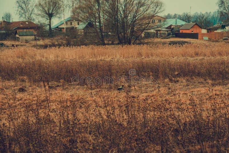 Hierba seca de la primavera retra fotografía de archivo libre de regalías