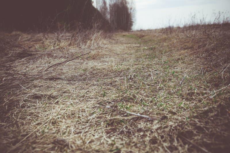 Hierba seca de la primavera retra imágenes de archivo libres de regalías