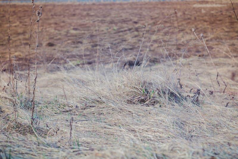 Hierba seca de la primavera retra foto de archivo