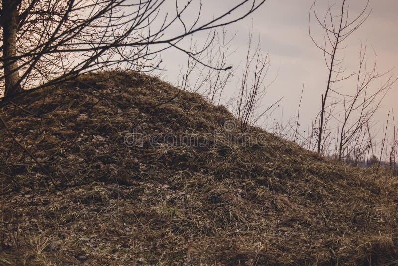 Hierba seca de la primavera retra fotos de archivo