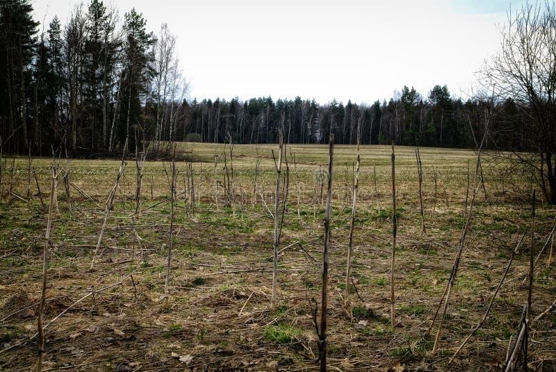 Hierba seca del ` s del año pasado en el campo que se inclina imágenes de archivo libres de regalías