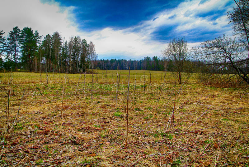 Hierba seca del ` s del año pasado en el campo que se inclina fotografía de archivo