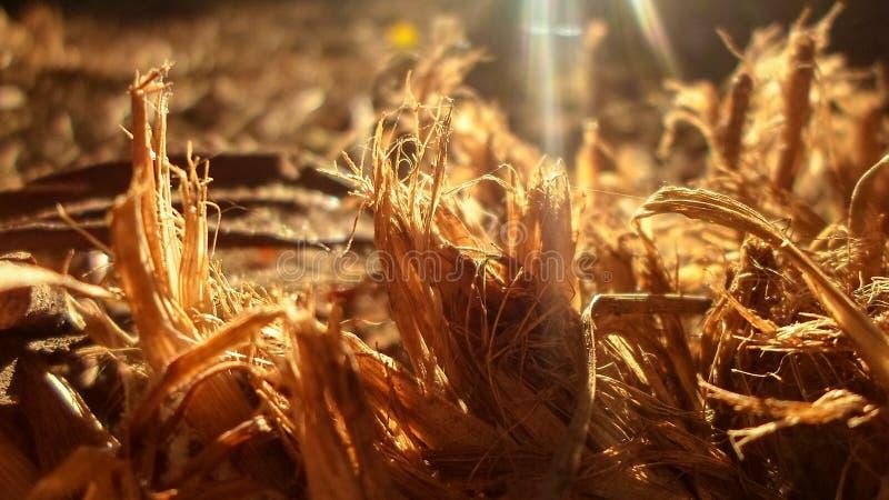 Hierba seca en la hora de oro fotos de archivo libres de regalías