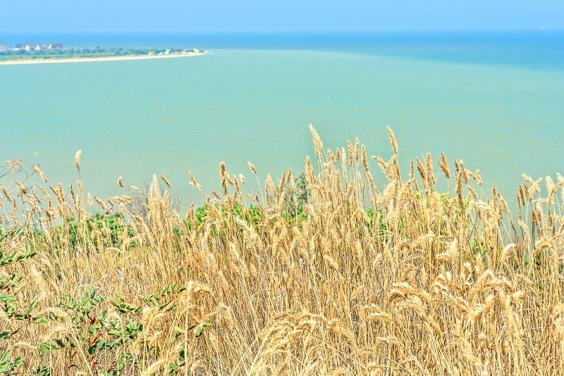 Hierba seca en la orilla del mar de la turquesa, primer imagenes de archivo
