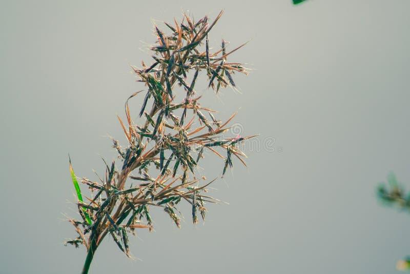 Hierba seca natural en verano fotografía de archivo libre de regalías