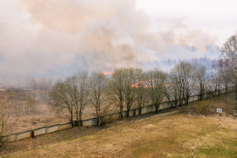 Hierba seca y ?rboles del Lit del incendio forestal Fuego inminente a los edificios residenciales Humo grueso en el bosque imagenes de archivo