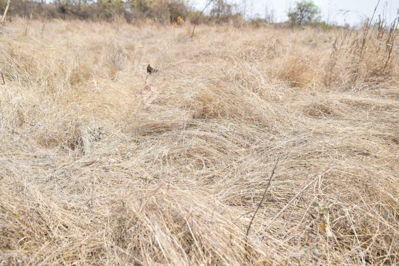 Hierba secada en la tierra fotos de archivo