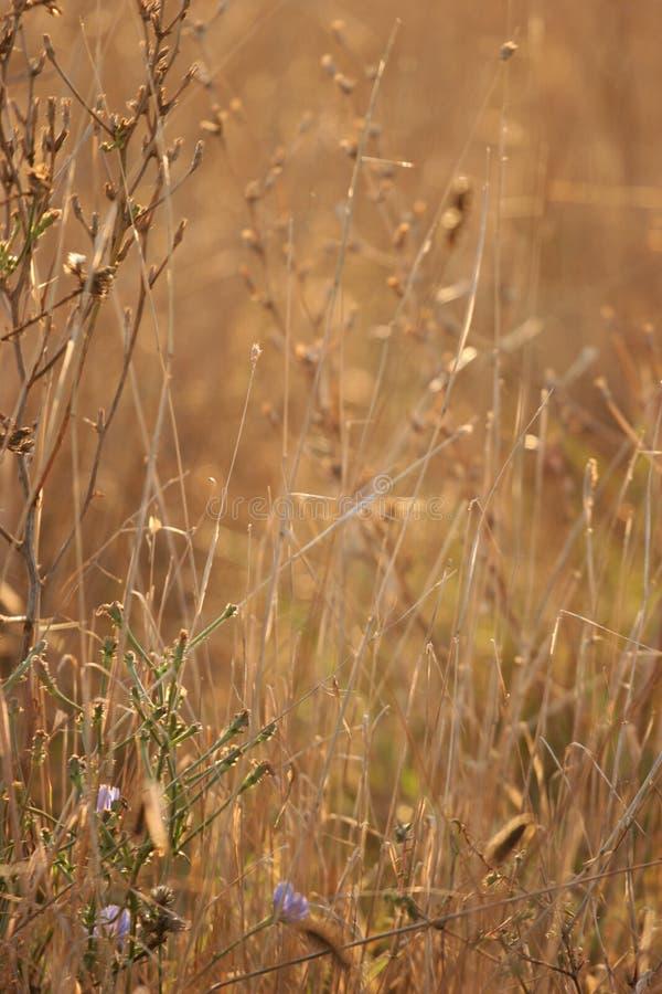 Hierba secada y flores imagen de archivo libre de regalías