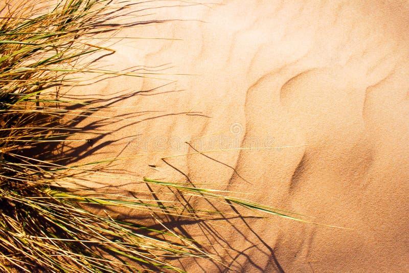 Hierba soplada viento en dun de la arena fotografía de archivo