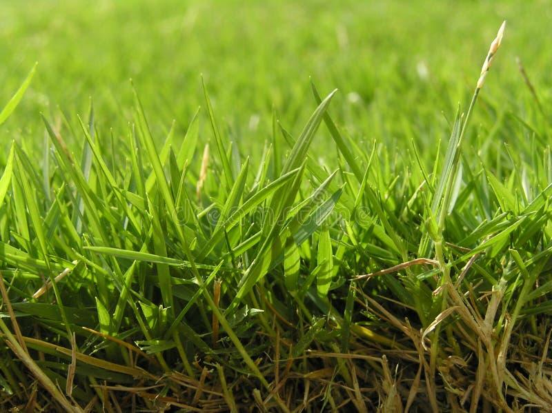 Hierba verde foto de archivo libre de regalías