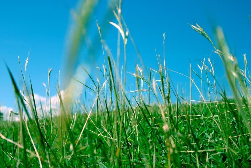 Hierba verde 2 fotografía de archivo