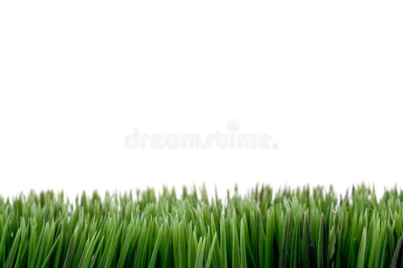 Download Hierba verde foto de archivo. Imagen de tierra, fondo - 7279984