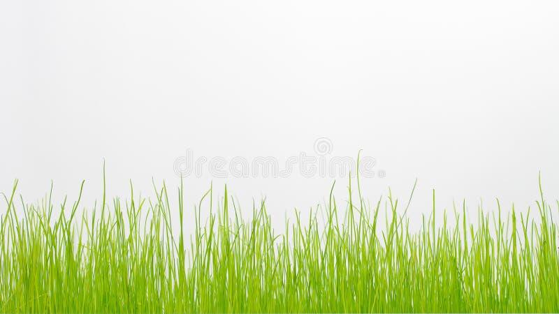 Hierba verde aislada en blanco imagen de archivo libre de regalías