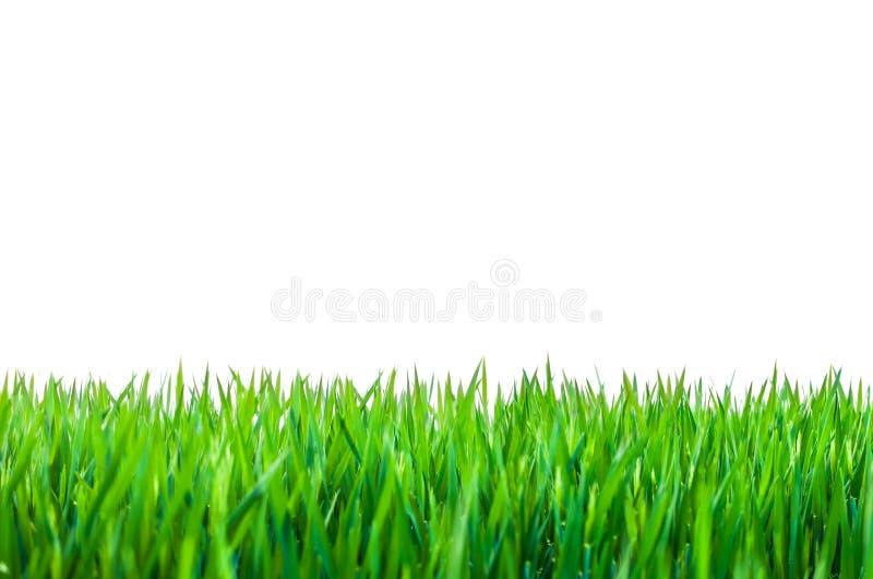 Hierba verde aislada en blanco imagenes de archivo