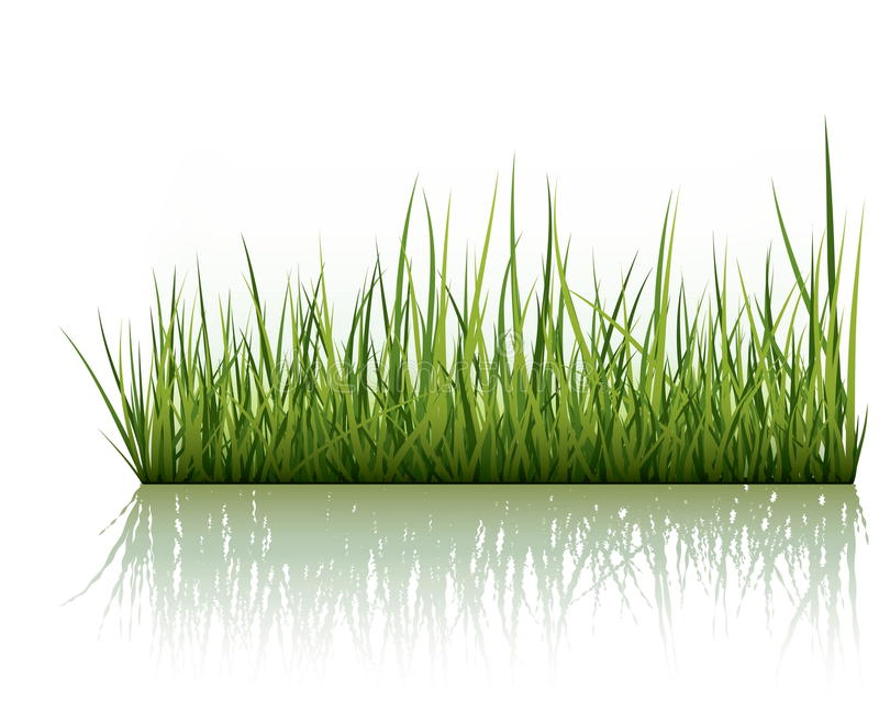 Hierba verde aislada en blanco libre illustration