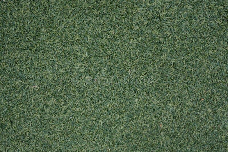 Hierba verde artificial foto de archivo