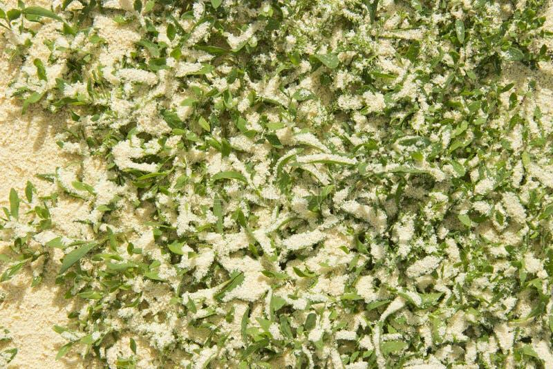 Hierba verde asperjada con serrín fotografía de archivo